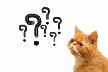 陸上無線技術士・陸上特殊無線技士とはどんな資格?